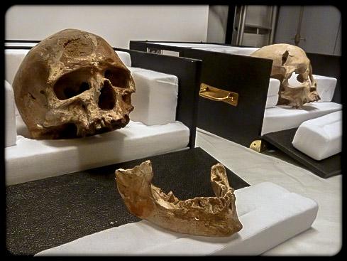 Le crâne du «  Vieillard  » avec la mandibule qu'on lui a attribuée, et un deuxième crâne à côté