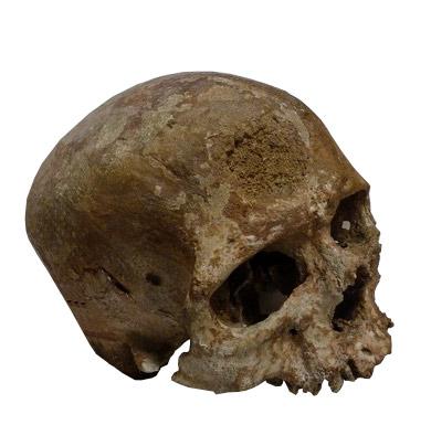 Le vieillard de Cro-Magnon