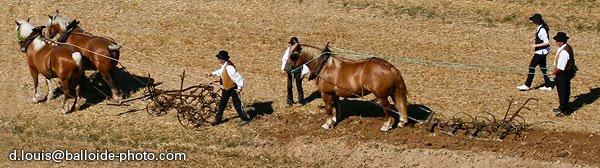 Charrue tirée par des chevaux