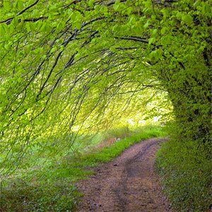 Sentier naturel près de Manzac 24110, Dordogne copyright Jean-Jacques Solari