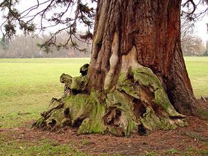 Un arbre - Parc de Noisiel