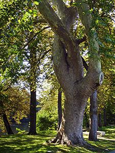 L'arbre de la méditation
