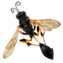 Insecte bizarre Périgueux