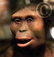 Lucy découverte en 1974 par Yves Coppens en Afrique