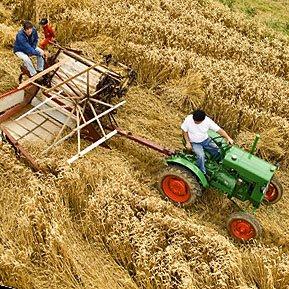 Moissonnage à Corneguerre avec ancien matériel agricole - Photo aérienne par Dominique Louis